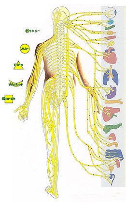 body_systems_2